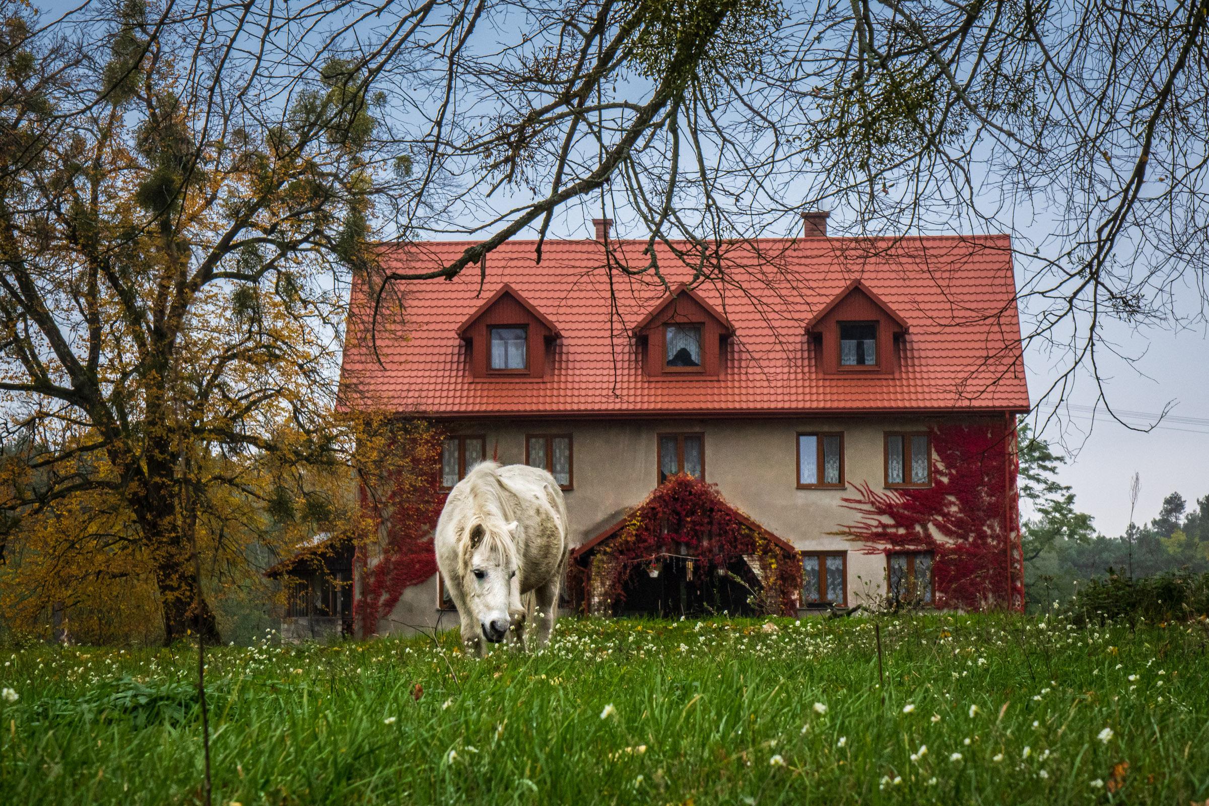 Polanka - agroturystyka i konie. fot. Krzysztof Zajączkowski