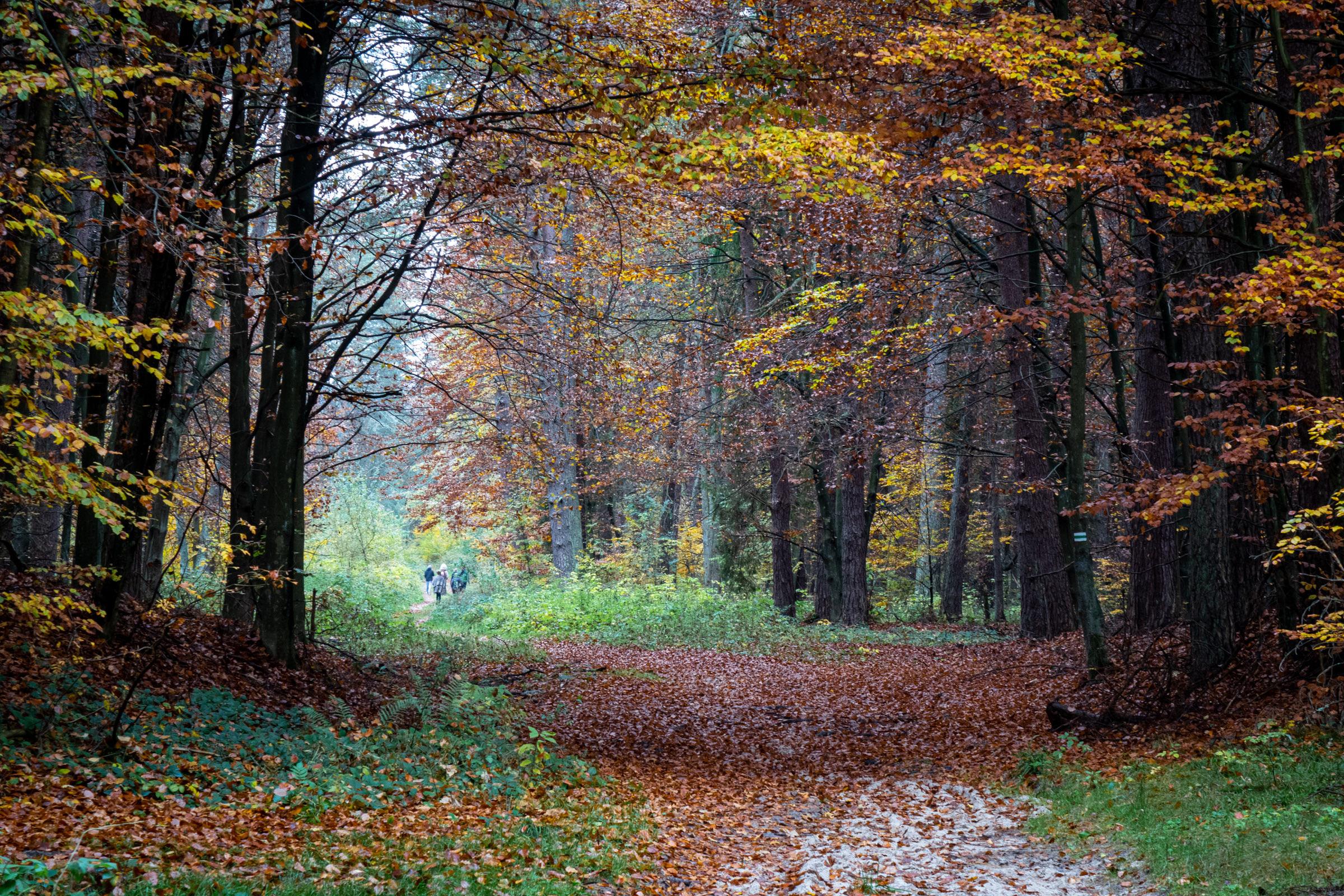 Zielony szlak w okolicy Monastyru. fot. Krzysztof Zajączkowski