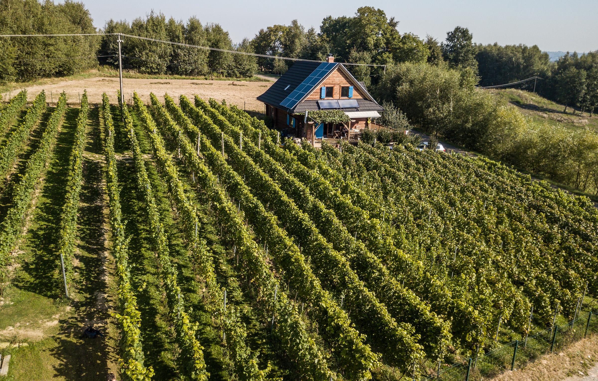 Winnica Granice
